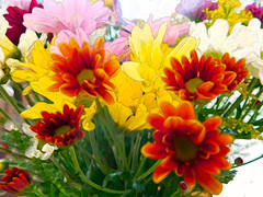 Essence....... (denise.bardauil) Tags: bouquet