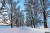 Dillners Avenue (kentkirjonen) Tags: canon 80d old gammal sweden sverige dalarna ue wood trä minesite gruvområde snow snö lights lampor allé avenue grängesberg