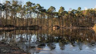 Oude Buisse Heide, Zundert, The Netherlands (2)