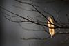 Suspended / suspendu (Régis (R208)) Tags: nature leave feuille jaune yellow automn automne hivers froid gris gray grey color coulour couleur