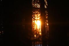 Flambeau (valérielecomte) Tags: tree coucher de soleil sun sunshine sunrise forêt forest winter hiver tronc arbre orangé macro paysage wallpaper woods parc canada