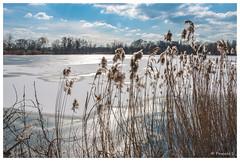 Etang gelé (Pascale_seg) Tags: paysage landscape river riverscape étang gel winter hiver snow froid cold moselle lorraine france nikon earth roseaux sky cloud