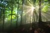Shining Through (Hector Prada) Tags: bosque niebla bruma luz hojas primavera árbol rayos atmósfera mágico momento sombras forest fog mist light shadows rays sunbeams mood magic moment leaves paísvasco basquecountry
