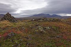 thingvellir (akhesaah) Tags: iceland islande thingvellir automn montain montagne automne red