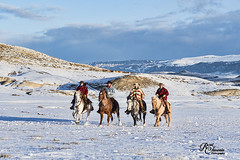 CodyWU_012318_1279 (Roni Chastain Photography) Tags: horses wyoming thehideoutranch wranglers big sky snow winter horse ridershorses west westernwear western