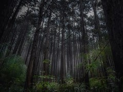 Memories of the wrong way (karinavera) Tags: photography ilcea7m2 forest japan tree