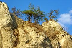 187 I grow on a rocky ground (Hejma (+/- 5400 faves and 1,7 milion views)) Tags: skały wapienne drzewa krzewy porosty niebieskie niebo