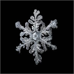Snowflake (Margo Dolan) Tags: snow snowflake winter ice crystal blackandwhite bw monochrome ringflash closeup canon mpe65 6d handheld frozen