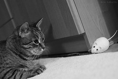 Mouse is round the corner ( rcg ) _uSiG (RaceGN) Tags: anais cat mouse watching play black white bw monochrome nikon dx35mm dx 35mm f18 d50 dslr interior carpet flat toy animal getigert nikkor lens ccd portrait facetoface face eyes look looking nxd handheld prime