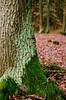 Maissau (Harald Reichmann) Tags: niederösterreich maissau wald baum moos flechte natur laub analog film olympusom4 baumstamm holz rinde eiche