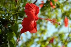 WOL Calauan Laguna Philippines Day 1 (63) (Beadmanhere) Tags: philippines flowers