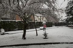 primeras nieves del año (_DSC0903) (Rodo López) Tags: elbierzo españa explore excapture nikon naturaleza nature naturalezacautivadora nostalgia naturebynikon nieve paraguas invierno