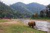 Elephant by the water (Lauro Meneghel) Tags: 2018 600d asia canon elephant thailand travel animals ef24105f4l elefante mammals natura nature park thai tailandia trip southeastasia exploring adventure world culture discover vibes sensations stunning emotions