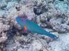 IMG_7650_s (AndiP66) Tags: unterwasser underwater meedhupparu raa atoll insel island malediven maldives indischerozean indianocean februar february 2018 canon powershot g12 andreaspeters