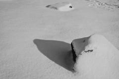 shadow or zen (shou yokoya) Tags: snow film monochrome acros 135 35㎜ bessat voigtlănder nokton classic 40㎜ f14 minimalism