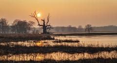 Rogalin 02-2018 #20 (Krzysztof Krr) Tags: sony a6000 nex selp18105g winter sunset tree trees rogalin rogalinek rogalińskiparkkrajobrazowy