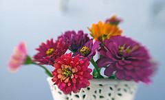 Cut flowers (Matjaž Skrinar) Tags: lensbaby composerpro sweet50optic 100v10f 250v10f 500v20f