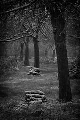 Le verger (martine_ferron) Tags: bois taille verger pommier hiver neige