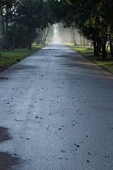 Ein Weg (chipdetty) Tags: sachsenanhalt magdeburg landeshauptstadt westfriedhof friedhof bäume cemetery impressionen dunst mist
