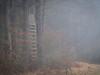 Hide, Flözlingen (Carsten Ranke) Tags: raisedhide hide flözlingen woodscape fog landscape pentax 645z blackforest