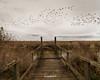 Black Birds (enigmamcmxc) Tags: 2017 7d bruno canon enigmamcmxc pereira portugal black birds