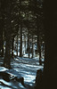Forest (sotirisdimi) Tags: parnitha greece snow mountain deer mushroom