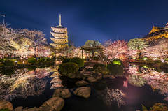 Not just any walk in the park... - Explored (NOAC_) Tags: japan japanese travel tourism temple pagoda asia asian evening dusk late night nocturnal blue colors colorful autumn reflection water pond toji tōji buddhism buddhist kyoto park garden sky architecture tree