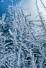 Jackfrost Blue (ralph miner) Tags: jackfrost