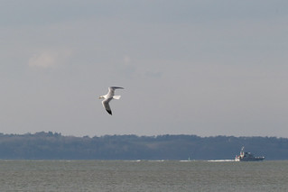 Gull and Archer class