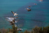 _HDA1101.jpg (There is always more mystery) Tags: capekidnappers gannets northisland newzealand clifton hawkesbay nz