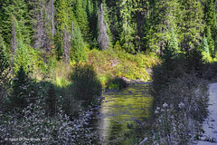 It's The Light (jimgspokane) Tags: crookedriver rivers creeks camping mountains forests trees naturewatcher