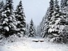 Loaded in snow (clickclique) Tags: snow trees forest winter nature white black naturescarousel