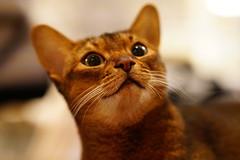 Curious cat (DizzieMizzieLizzie) Tags: planar zeiss bestofcats