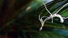 The fall of Crystal Praying Mantis (Giovanni Luvisa) Tags: crystal praying mantis