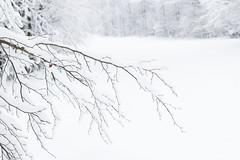 34/50 project 50 mm (Thea Teijgeler) Tags: sneeuw sauerland whiteworld boom landschap