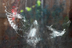 Rowlett - Window Accident (Drriss & Marrionn) Tags: backyard dallas dallastx texas usa outdoor window print dove glass wings wing abstract