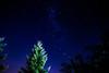 Buscando una estrella (Javier A. Villagra) Tags: estrellas noche nocturna álamo pinos largaexposición bulb majestic impressive beautiful landscape nature paisaje serenidad paz canon t7i elbolson rionegro patagonia argentina efs18135mmf3556isstm 800d