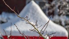 Schneehaube 01 (p.schmal) Tags: olympuspenf hamburg farmsenberne winter