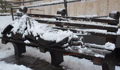 la realta (freedoog) Tags: neve roma vaticano tiber tevere fiume pupazzo biciclette santa maria closcard punk bestia cani palle di bianco trilussa ponte sisto porta settimiana usa america