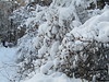 again tones of snow (VERUSHKA4) Tags: neve neige vue view canon europe russia moscow city ville cityscape place hiver winter february nature bush bough branch album park kuskovo day people seed two
