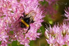 Fantastique nature ( photopade (Nikonist)) Tags: macro mac imac couleurs insectes fleurs nikon affinityphoto