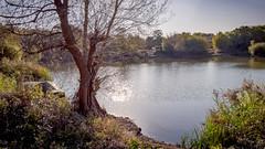 DSC_2984-HDR (michael.martin586) Tags: lake tree landscape kent uk 2017 d7200 oare oct sigma1750mmf28 hdrmerge3accus
