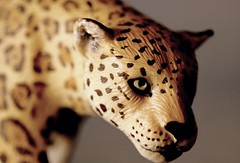 The Leopard (flowrwolf) Tags: macromondays theleopard giuseppetomasidilampedusa schleich schleichtoys toy toyleopard macro macrophotography makro macrophotograph fujifilmxt20 xf60mmf24rmacro indoor indoors inside tabletopphotography myfavouritenovelfiction 118in2018 118picturesin2018 91animalfor118in2018 flowrwolf