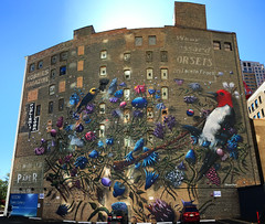 Feathered Forage by Collin van der Sluihs (wiredforlego) Tags: graffiti mural streetart aerosolart publicart chicago illinois ord wabashartscorridor collinvandersluijs ghostsign bird