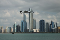 _MG_4732 (David_Hernández) Tags: arab emirates