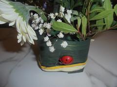 043 (en-ri) Tags: vaso pot coccinella rosso verde sony sonysti
