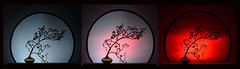 Rearranged: three aspects of Love (Maurizio Scotsman De Vita) Tags: rami studio branches italia naturamorta campania glassbowl stilllife sferadivetro