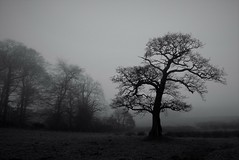 Mist-er Tree Time (Neale H) Tags: blackwhite bw tree trees countryside rural nature foggy fog mist blackandwhite