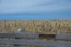 Memorial (Bud in Wells, Maine) Tags: kennebunk maine parsonsbeach bench spring coastal newengland
