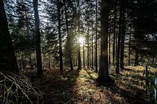 Woodland light....